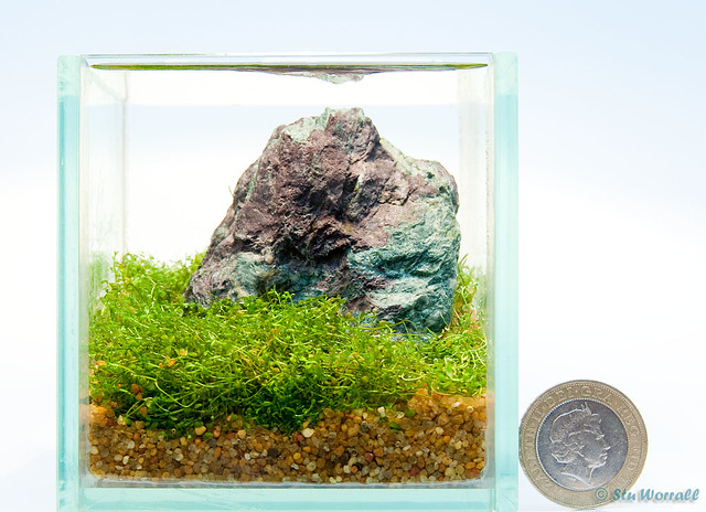 ... Nano Aquascape | By Stu Worrall Photography