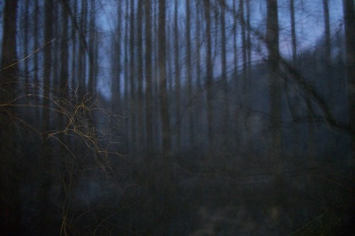 THE WOODS AT DUSK 2 | by A QUIVERFUL OF FOTOS