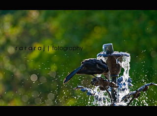 Thirst... | by r a r a r a j | fotography
