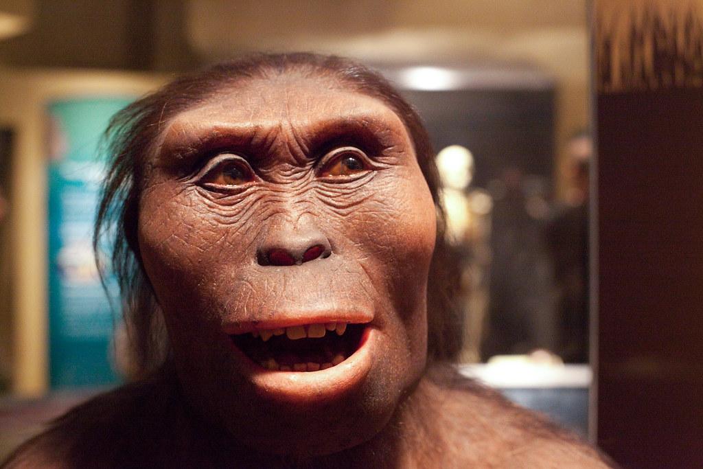 IMG_0181 | en.wikipedia.org/wiki/Lucy_(Australopithecus) | digitonin | Flickr