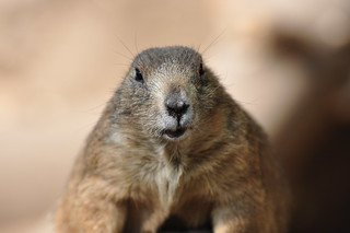 Groundhog Day | by StephenZacharias