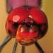 Red helmet ...