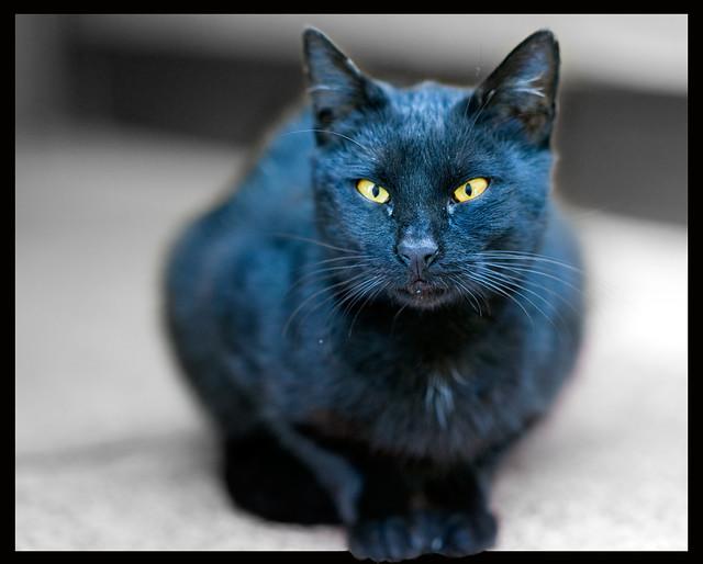 Black Cat Janet Jackson 1990 Street Cat Photo Flickr