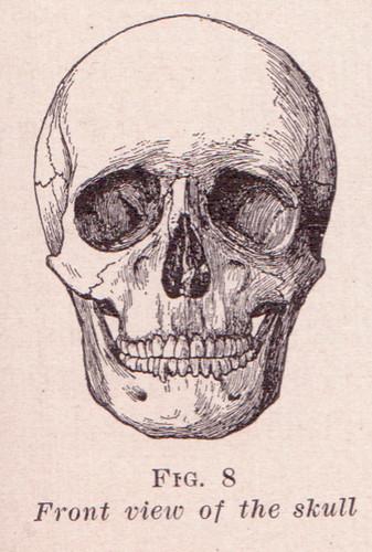Front View of Skull | by perpetualplum