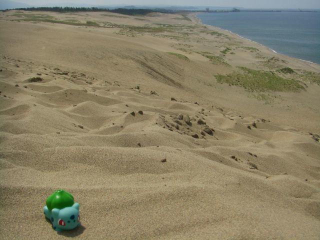 Bulbasaur in Tottori 4 (Tottori Sand Dune)