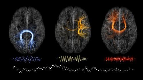 neural-rhythms