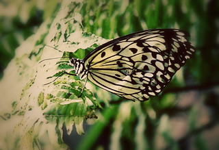 Butterfly | by oh magada!