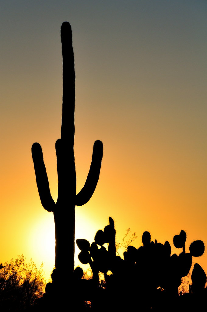 Saguaro & Prickly Pears | Giant saguaro cactus and prickly ...
