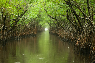 Everglades and Turner River | by chaunceydavis818