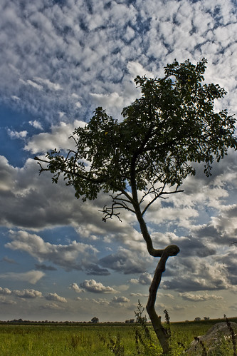 one more single tree | by thonk25