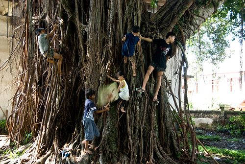 Children playing in a tree in Royal Palace