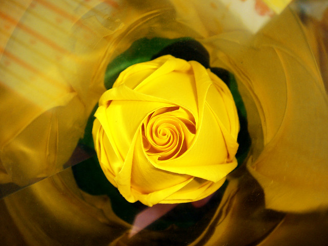 Yellow rose hope hope hope it means hope love sincerity yellow rose by the gift of gifts mightylinksfo
