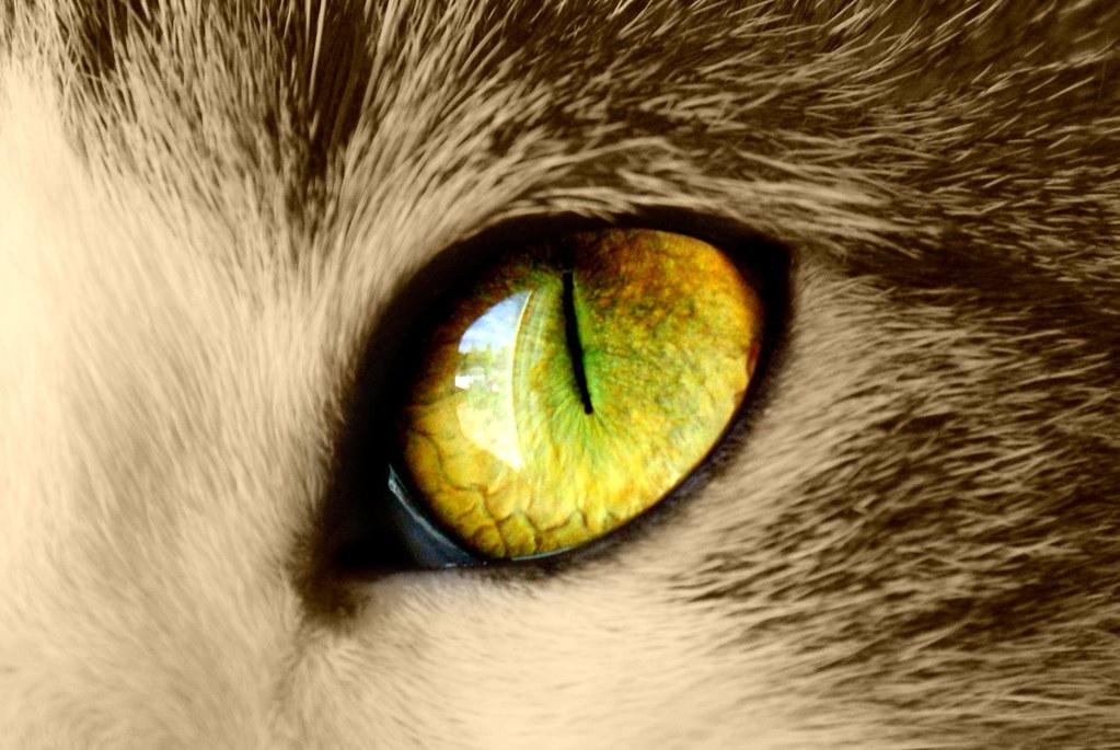 Cat Close Up Eyes Closed Emerald Eyes Ginger Cay