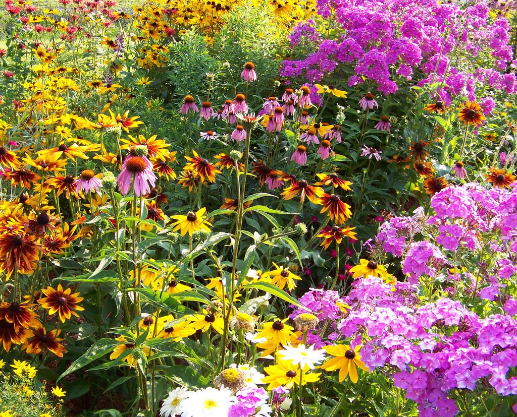 Colorful maine perennial garden taken by eric jenkins for Wild flower garden designs