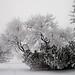 Frosty Alberta Christmas