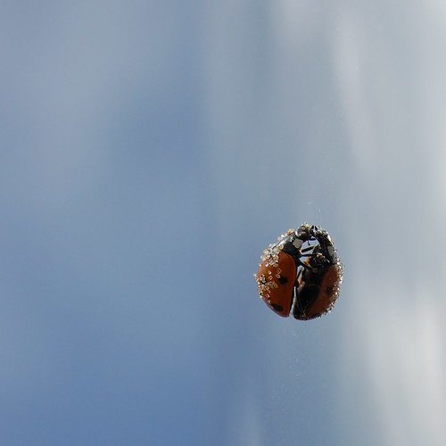 2009-08-02 Up, up, to the sky, li'l ladybug 2 | by [ henning ]