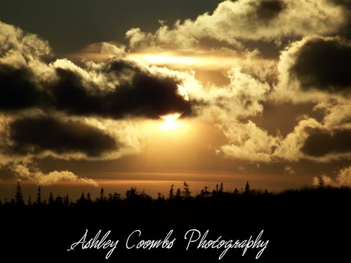 ashley coom