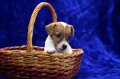 dog-basket | by Kathytt624