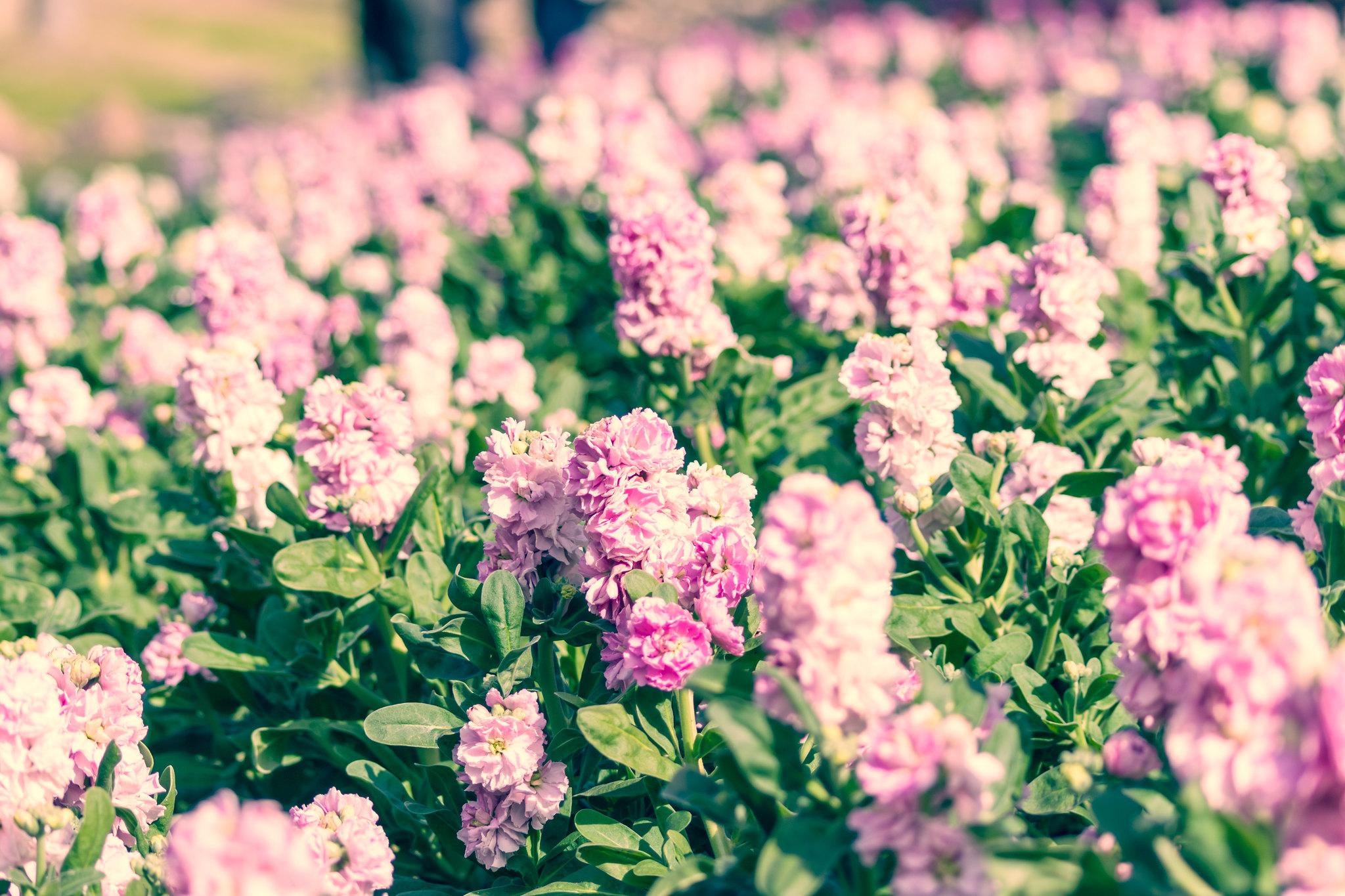 寒空の花畑2