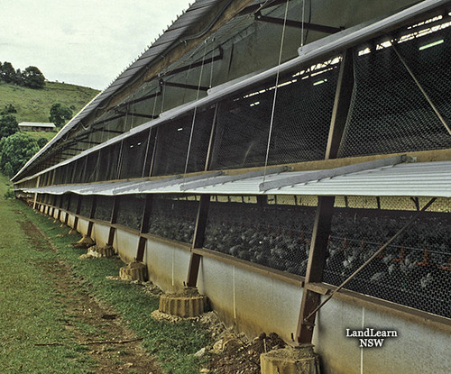 Chicken Broiler Shed Poultry Buildings Chicken Broiler