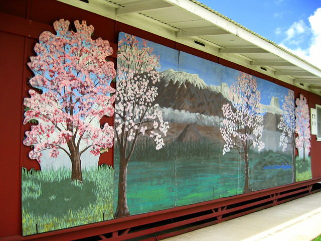 Cherry blossom mural flickr photo sharing for Cherry blossom mural
