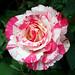 vermelho-branco-rosa