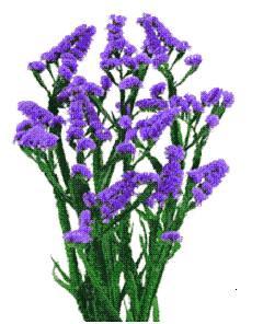 Fillers Purple Statice Abacoflowers Bulk Statice Flowe Flickr