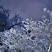Niagara Frost