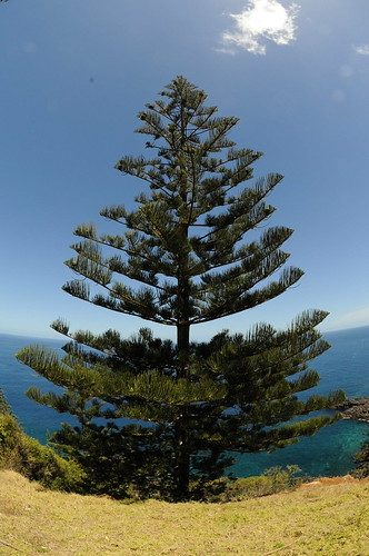 Norfolk Island Which Nsw Laws Will Apply