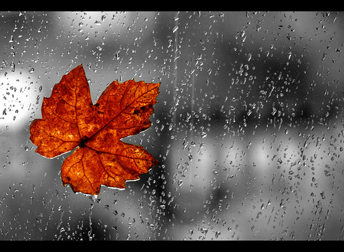 "Rain again | by *Chris"")"