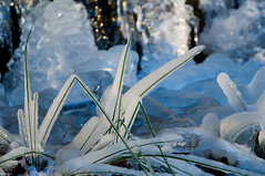 Icy grass | by Rolfen