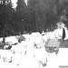 Forestry Development Camp 1936