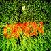 Open Grassy Omen