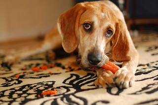 Carrots, oh yum. | by Canopener Sally