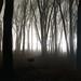 November Night Fog