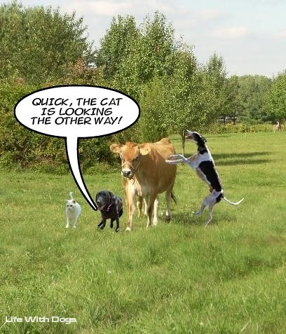 how to get to cows conker