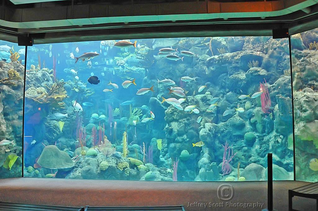 Big Fishtank At Florida Aquarium A Photograph Of One Of Th Flickr