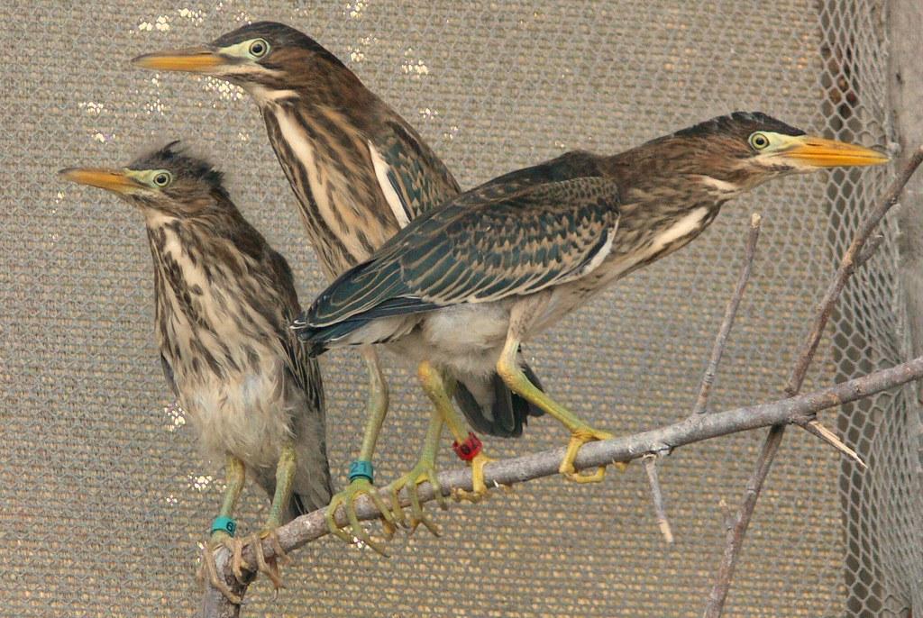 Help For Orphaned Infant Birds Near Johnson City Tn