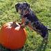pippi vs. pumpkin
