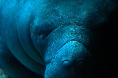 Dallas Aquarium Jobs