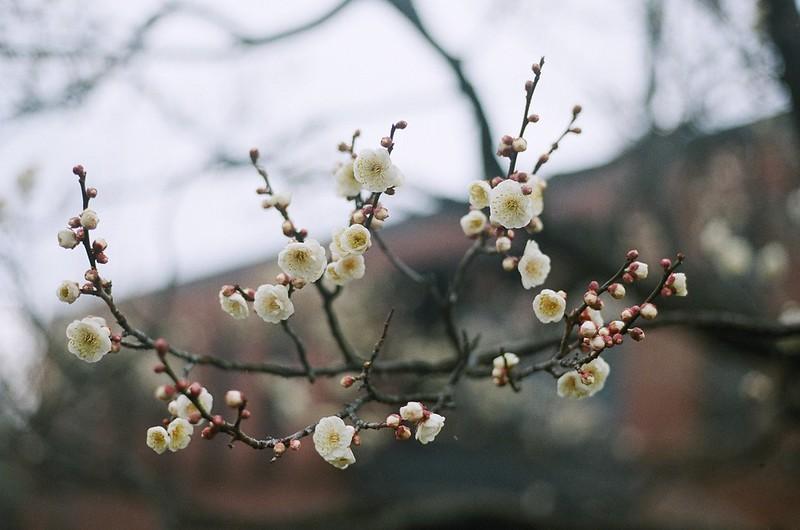 Une blossom