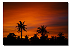 Karon Sunset Palms | by Chapmanc123