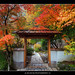 Autumn Colors at Portland Japanese Garden 3
