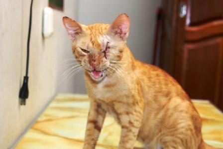 Cat Has Scratch On Chin