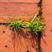 Grass Between Bricks