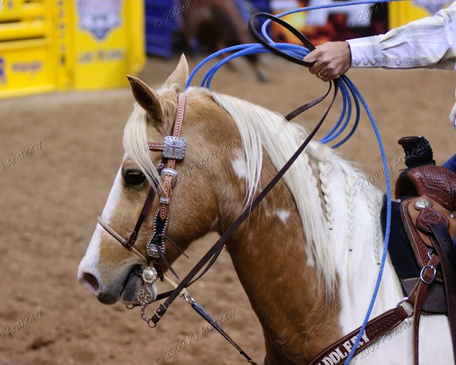 Wrangler National Finals Rodeo Team Roping Dec 3 12 0