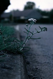Gutter weed | by @Doug88888