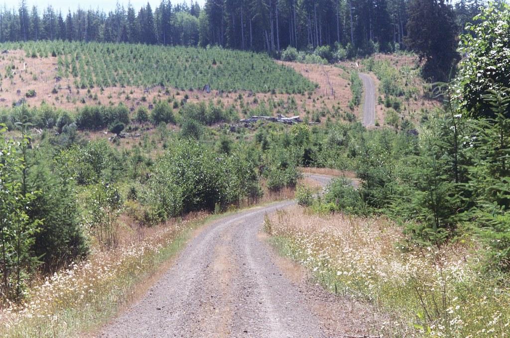 Logging Road Northwest Oregon Sarah Gilbert Flickr