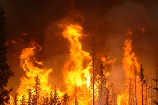 Banff Prescribed Burn 2009 | by Eggs&Beer