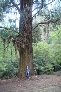 Nick in front of huge mountain ash | by louisa_catlover
